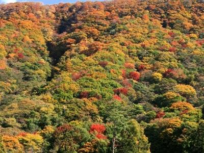蒜山付近の紅葉