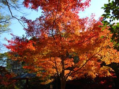 松江城の紅葉