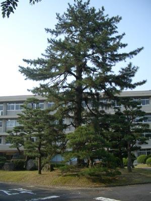 松江北高校