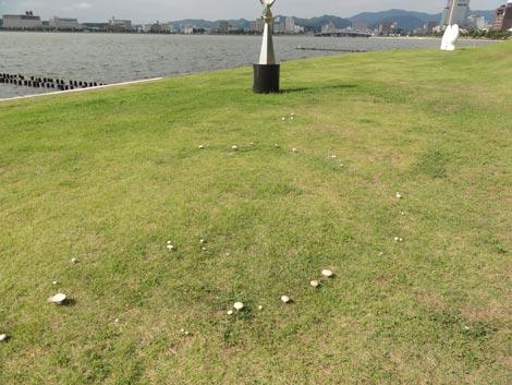 宍道湖キノコ