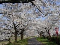木次の桜2009 その2