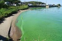海藻からバイオ燃料