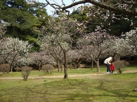 松江城山公園の梅林